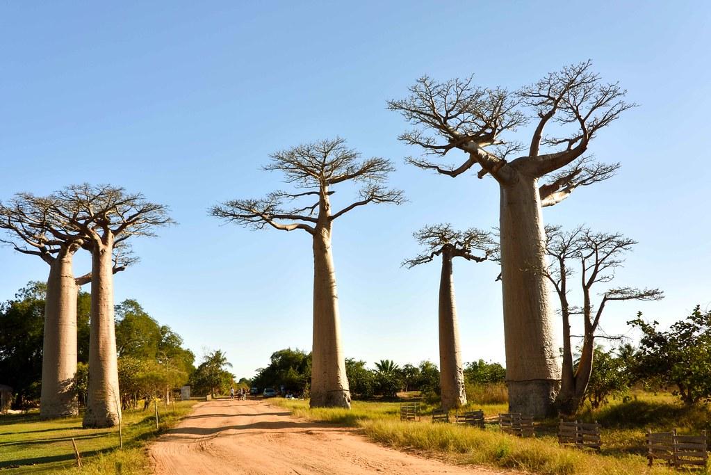 Découvrez librement Madagascar en voiture de location